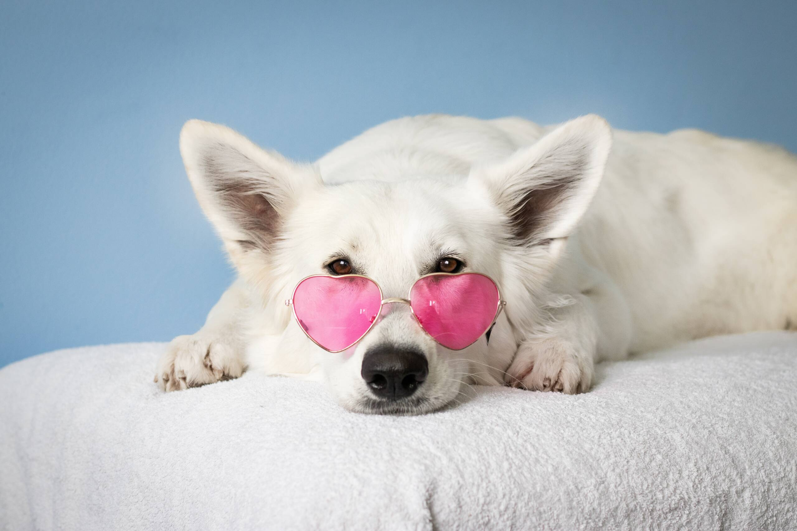 Dog Grooming | Audrey's Barkyard | Wake Forest, NC